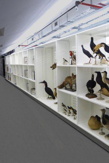 Deposito visitabile del Museo civico di san Francesco a Cuneo