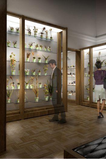 Allestimento del Museo di storia naturale della Specola a Firenze